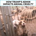How Trump's admin impacts animal cruelty [Mic Archives]