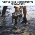 Why we need environmental regulations
