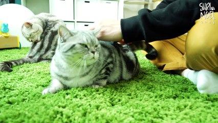 5 Kitties' Fur ! - Video You Must Watch Before Adopting Cat 5마리 고양이 털은 얼마나 빠질까 - 고양이 키우기 전 봐야 할 영상