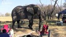 Huge elephant takes shortcut through tourists' campsite