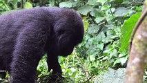 9 Ways Primates Act like Humans