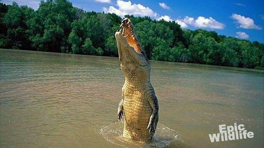 Giant One-Armed Crocodile - Brutus