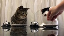 Des chats passent commande avec une sonnette pour obtenir leurs croquettes