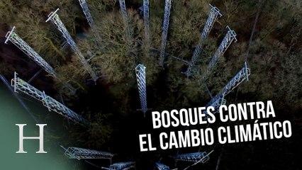 El bosque que ayuda a luchar contra el cambio climático