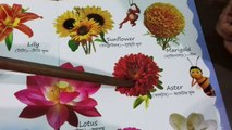 Flowers Name , ,  Learn Online Flowers Name With Picture For Children , ,  Learn Flowers Name In English For  Kids , ,