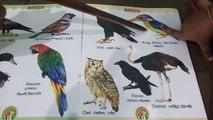 PDF Download] NAMING THE BIRDS AT A GLANCE [Download] Online - video