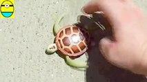 Toys review toys unboxing. Robo turtle. Turtle dáoash unboxing toys egg surprise t