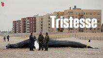 Une baleine s'échoue sur une plage new-yorkaise