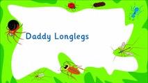 Kidzone - Daddy Longlegs