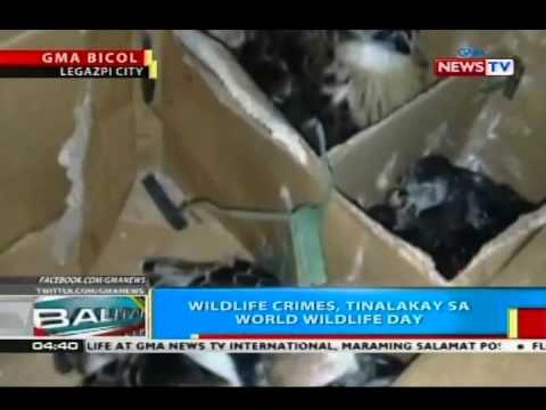 Wildlife crimes, tinalakay sa World Wildlife Day