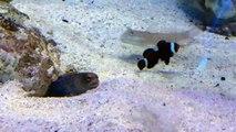 Un poisson trolle un autre poisson...Haha