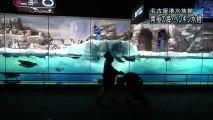 名古屋港水族館シリーズ 「南極の海・ペンギン水槽」