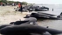 Comment diminuer le bruit au fond des océans pour sauver les animaux marins