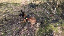 Formation chiens de sauvetage
