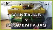 PROS Y CONTRAS JAULAS CyC | C&C CAGES | ANALIZANDO LO BUENO Y LO MALO DE ESTAS JAULAS