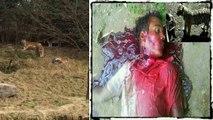 Tiger kill man zoo india - video dailymotion