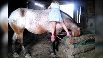 Cette fillette tente de grimper sur un très grand cheval ! Pas facile