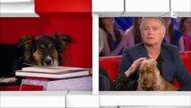 """Dans """"Vivement dimanche prochain"""", Michel Drucker a tenté d'interviewer... un chien !"""