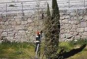 Un pompier secoue un arbre pour faire tomber un chat !
