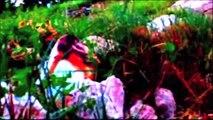 Bura 2009 - Kroatien, Dalmatien und Istrien Folge 04 /Full Film/Complete Movie/Ganzer Film