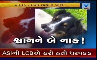 [MP4 480p] This Dog Have Two Noses _ Viral Video _ Vtv Gujarati
