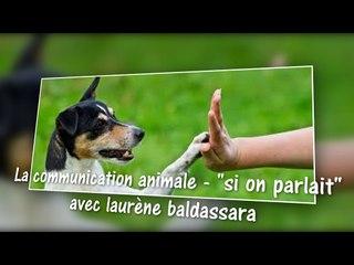 la communication animale - si on parlait - avec laurene baldassara