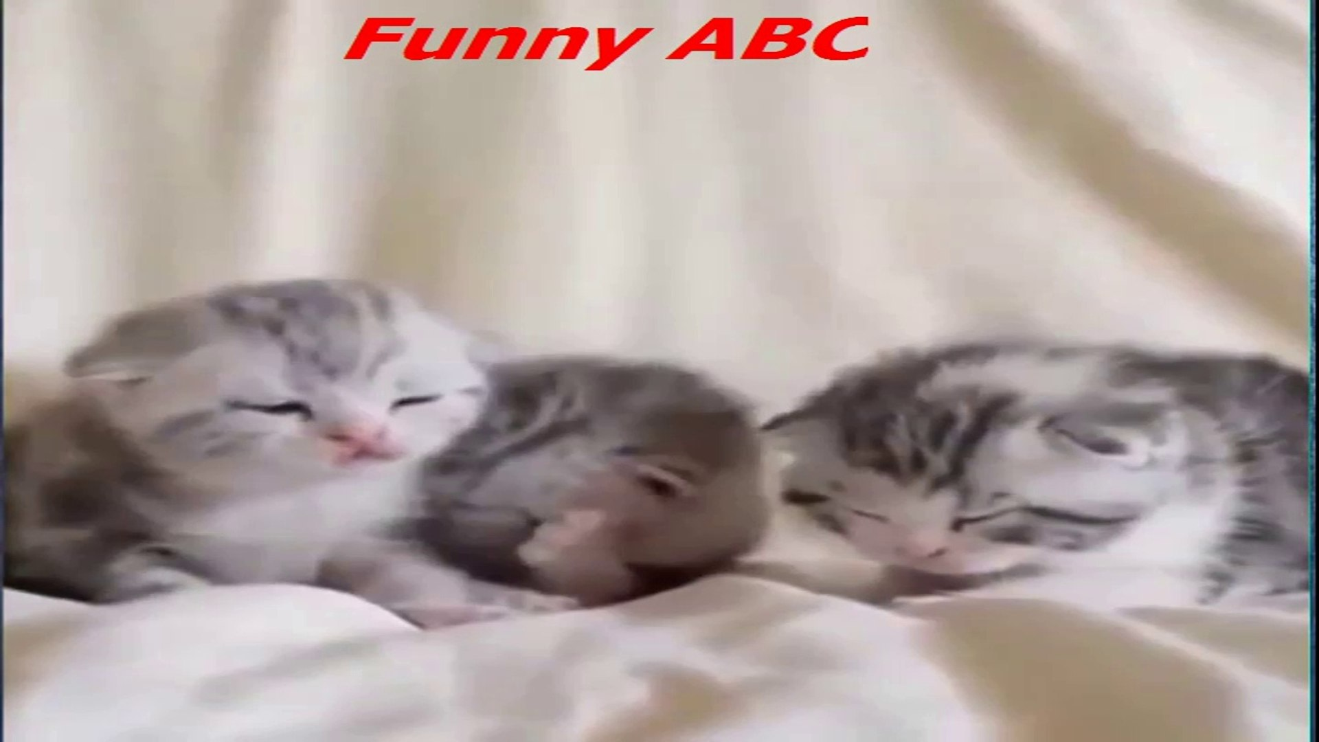 Top 10 Funny Cat & Dogs Funny Videos 2017 Cat & Dogs