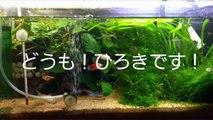 魚に優しい給水用ペットボトルを作ってみた!!