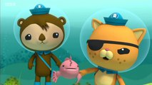 The Octonauts 1 - The Artificial Reef - The Humpback Whales - The Pelicans - The Sea Pigs - Yeti Crab