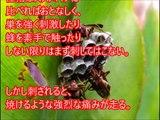 【閲覧注意】人間が経験しうる「痛み」マジでヤバイ刺されたら痛い虫ランキング 地球上に存在する刺されたらマジでヤバすぎる虫たち【危険生物】