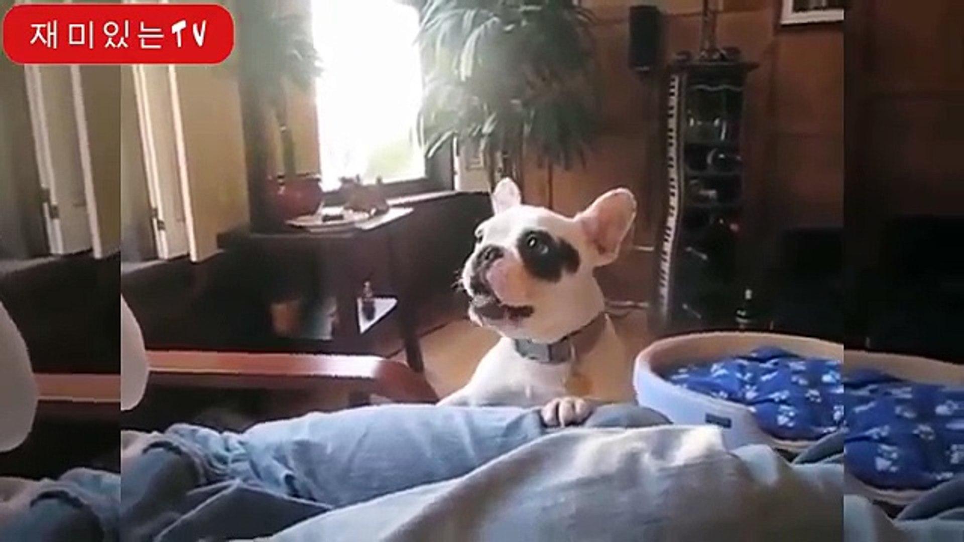 Смешни кучета лаят - смешно куче лае клипове. компилация