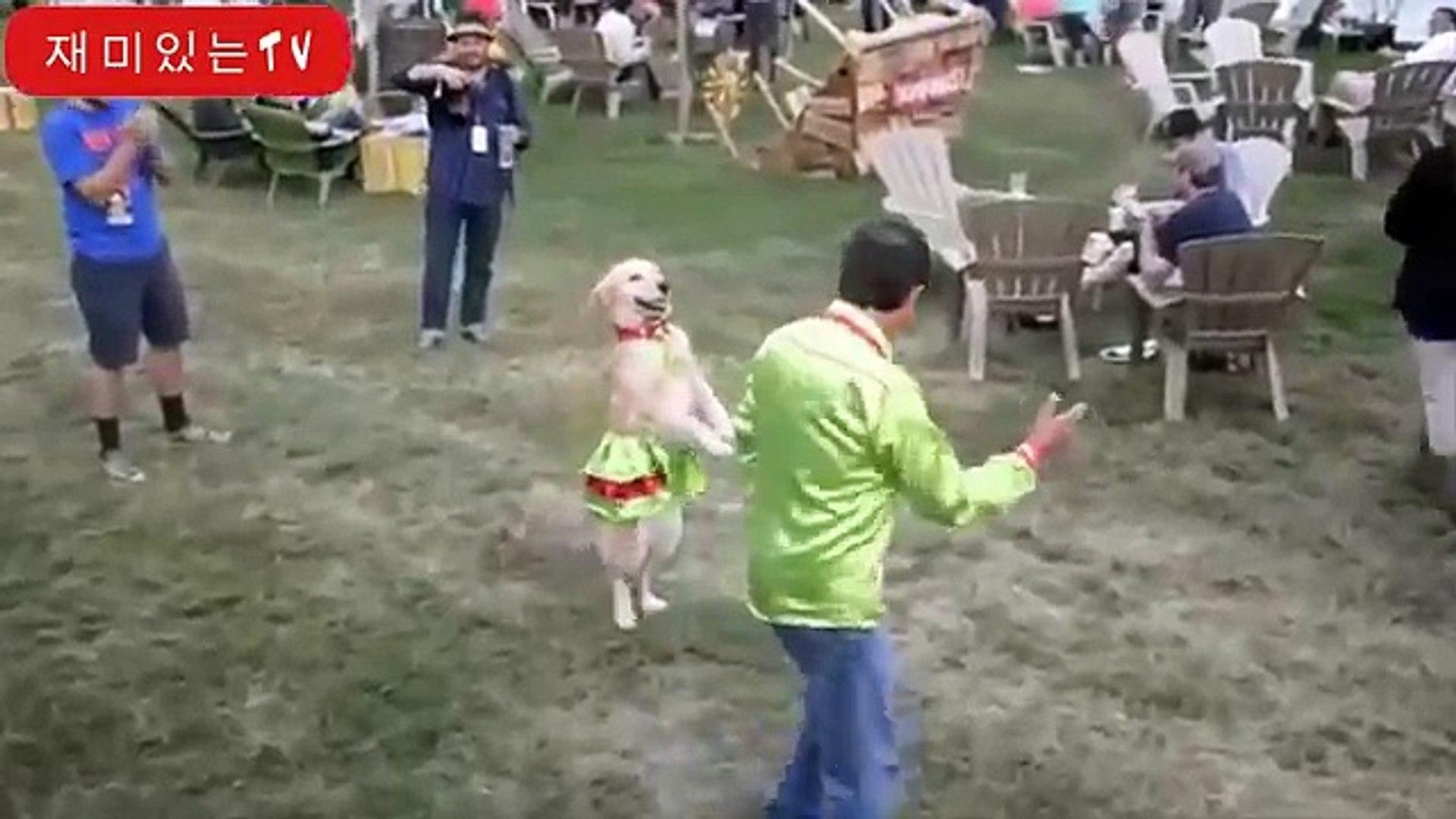 Смешни животни се държат като хора видеоклипове. компилация