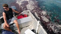 Milliers de méduses... ne saute pas dans l'eau !!