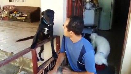 Canino culpado fez algo ruim. Confira como ele pede desculpas…Isso é MUUUUUITO FOFO!!