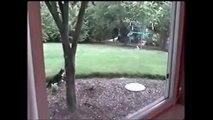 Ce lapin echappe à l'attaque d'un chat en mode kung fu!!!!
