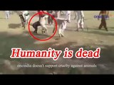 Cow stops Dogs from fighting, Watch Amazing Video   Oneindia News