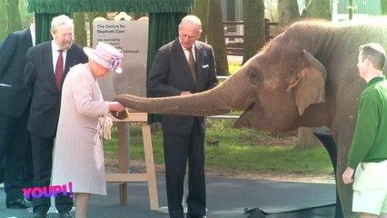 Youpi ! - La reine d'Angleterre et Donna l'éléphant - Le Petit Journal du 13/04 - CANAL+
