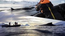 The South Pole Is In Trouble