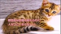 猫派急増中!飼いやすさの満足度が高い猫 ランキングTOP20