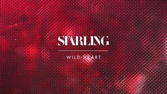 Starling - Wild Heart
