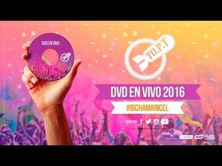 TO.P.T en vivo Zebra Club 2016 - 09 BICHA MARICEL®
