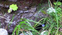 恵庭岳②頂上岩塔に立つ 2013年7月22日