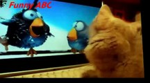 Funny dogs ,dogs videos ,dogs, hot funny, Funny dogs videos hot funny animals part 14