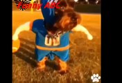 Funny dogs ,dogs videos ,dogs, hot funny, Funny dogs videos hot funny animals