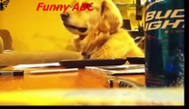 Funny dogs ,dogs videos ,dogs, hot funny, Funny dogs videos hot funny animals part 12