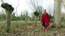 La chalarose menace le Marais Poitevin - Vendée-3nrGsPATyuc