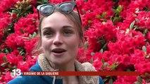 Bretagne : un parc unique de rhododendrons et d'azalées