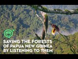 Saving the forests of Papua New Guinea by listening to them, literally | Coconuts TV