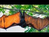 10 Abnormally Large Animals That Actually Exist