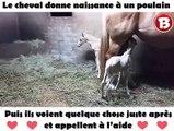 Le cheval donne naissance à un poulain – puis ils voient quelque chose juste après et appellent à l'aide
